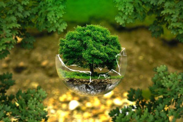 Świadomość ekologiczna w Polsce