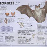 nietoperze - infografika