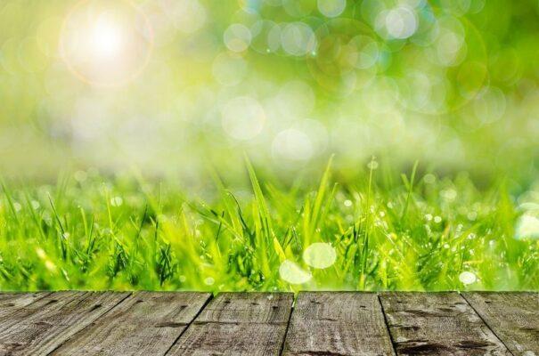 drewniany podest na tle zielonej trawy